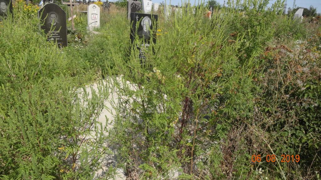 фото уборка захоронений в Днепре
